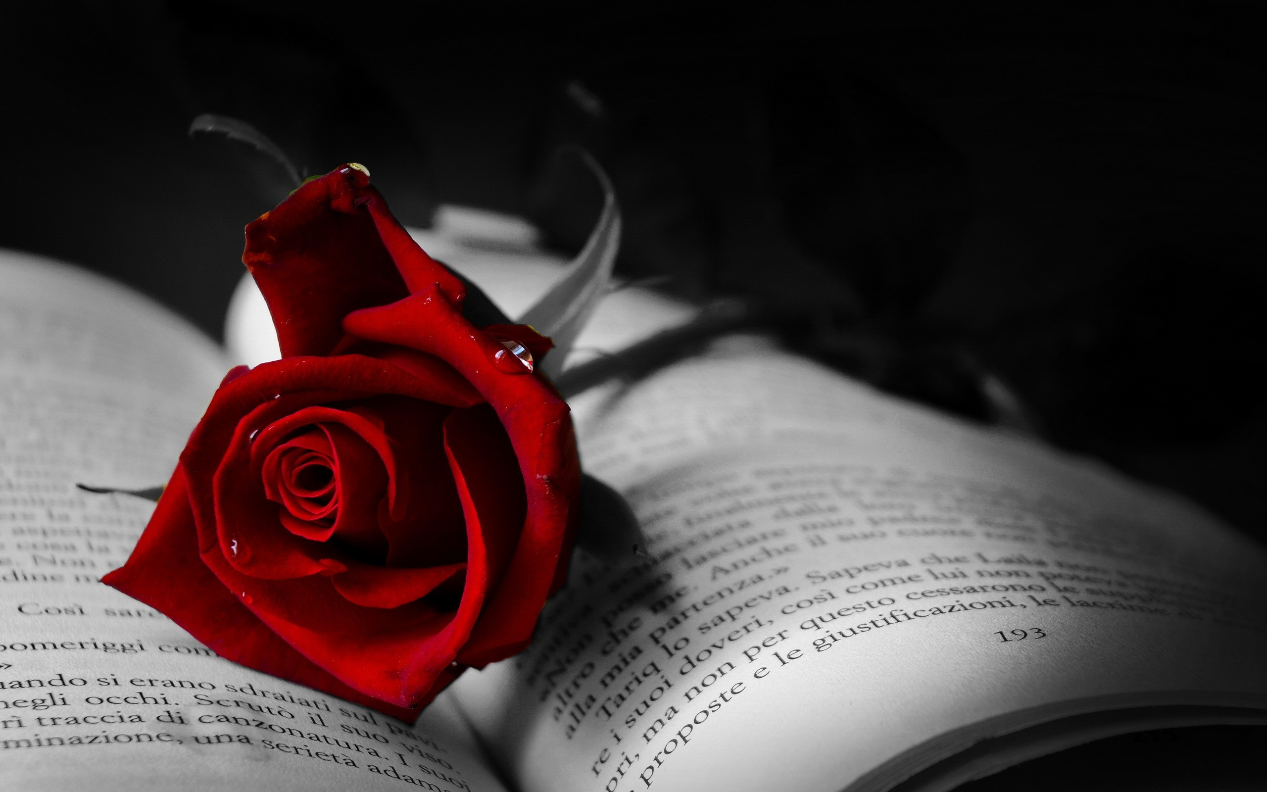2560x1600 Book with red rose wallpaper
