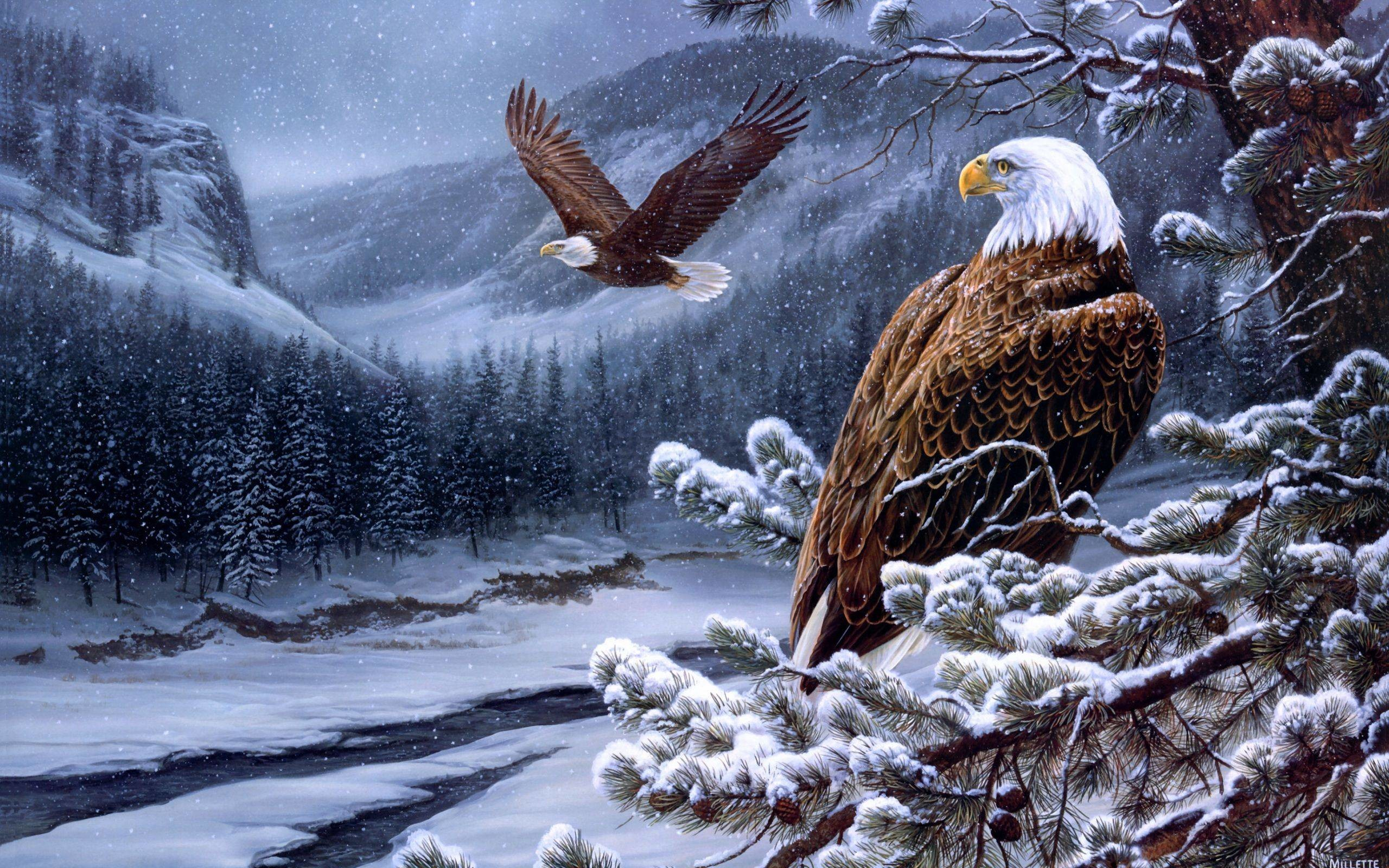 2560x1600 HD The Bald Eagle Wallpaper | Download Free - 103448