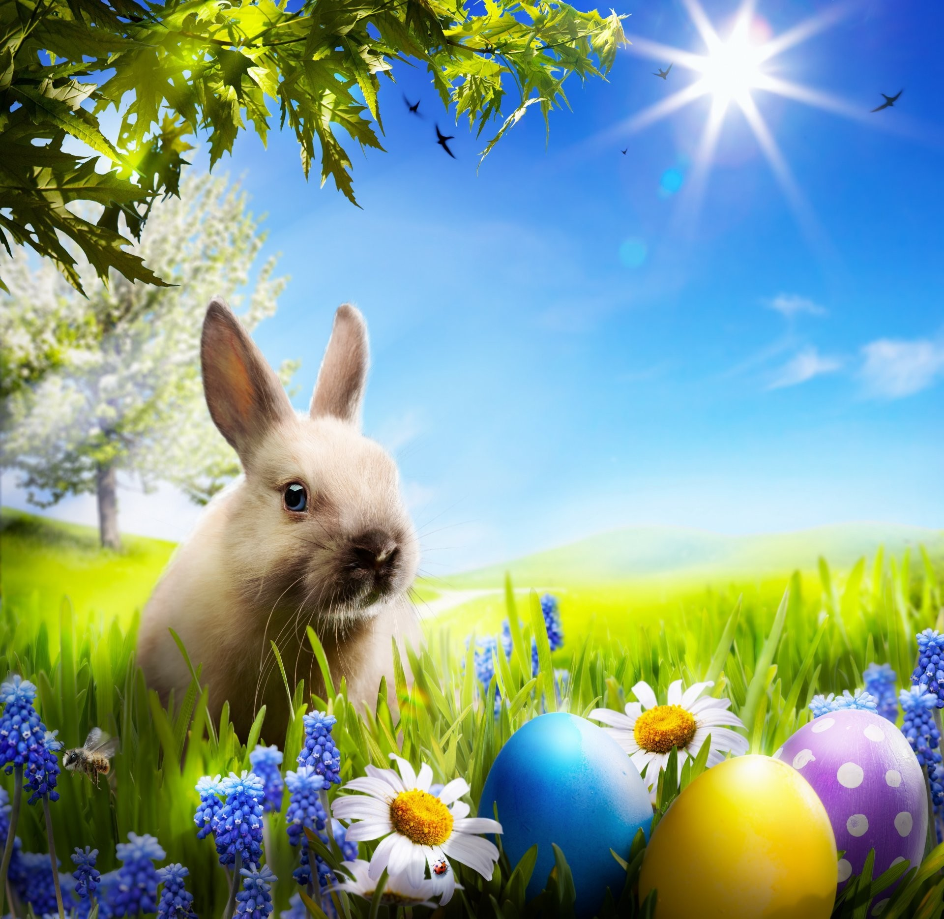 Spring Bunny Wallpaper (61+ Images