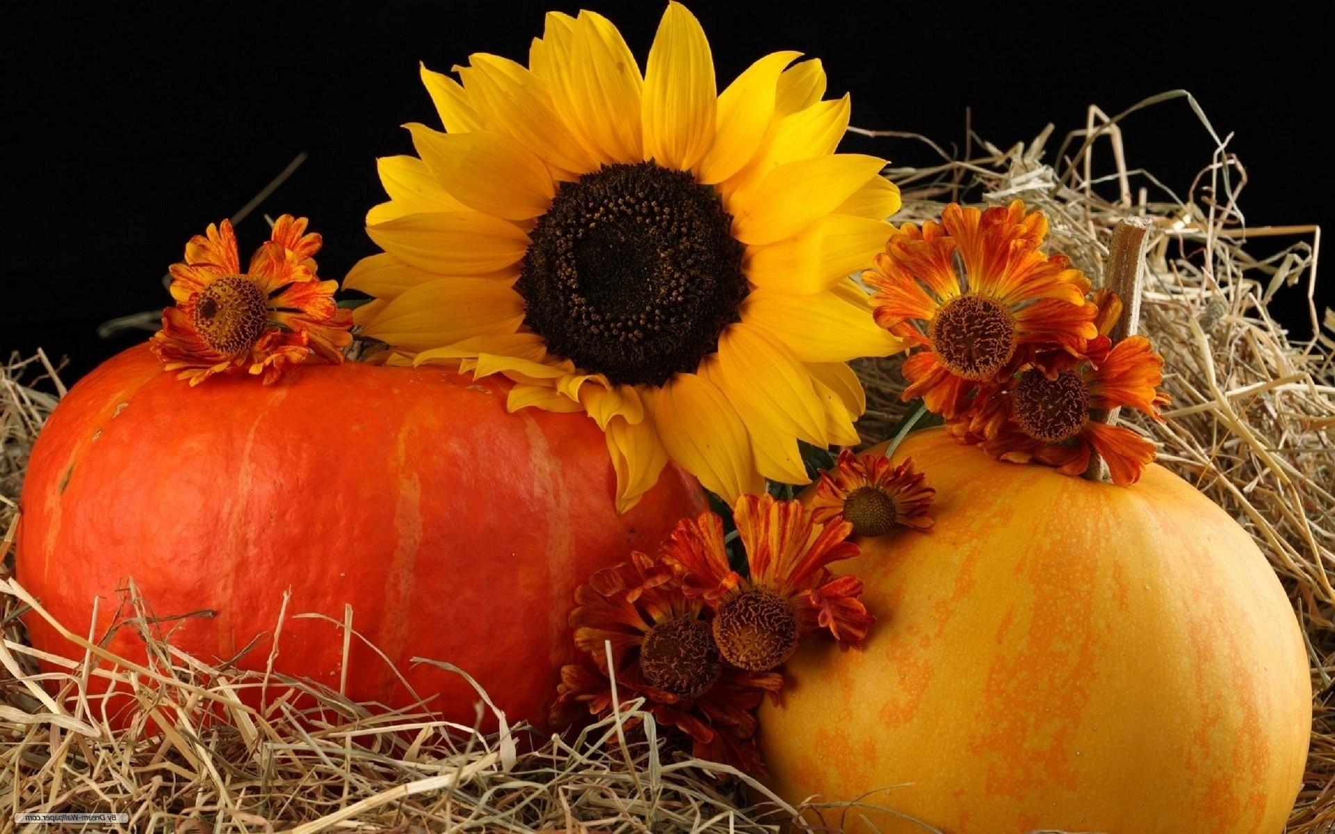 autumn pumpkin wallpaper 47 images