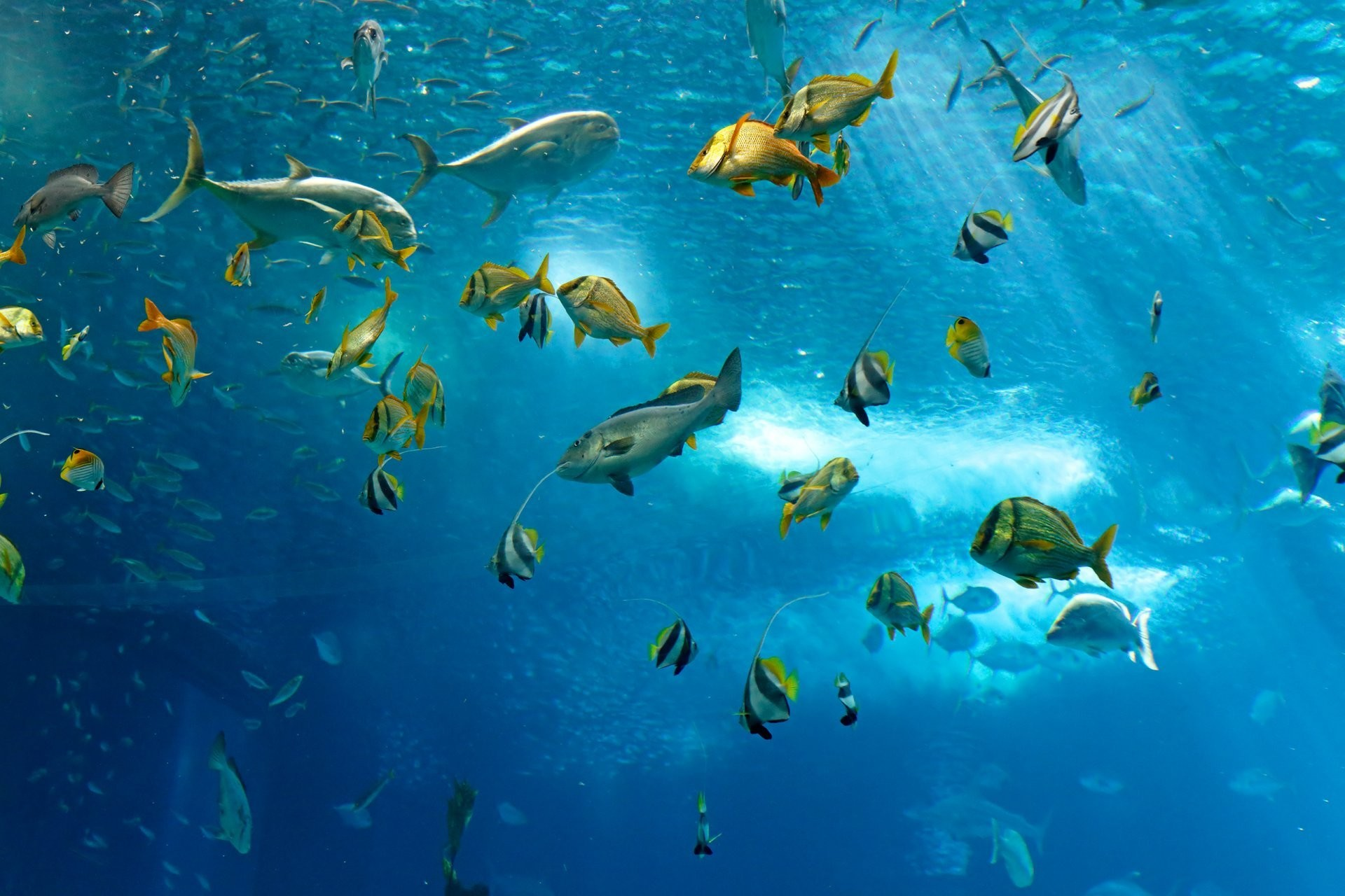 1920x1280 fish underwater sea ocean fish under water sea ocean