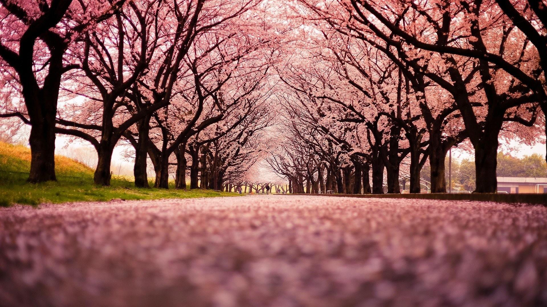 japanese desktop wallpaper (70+ images)