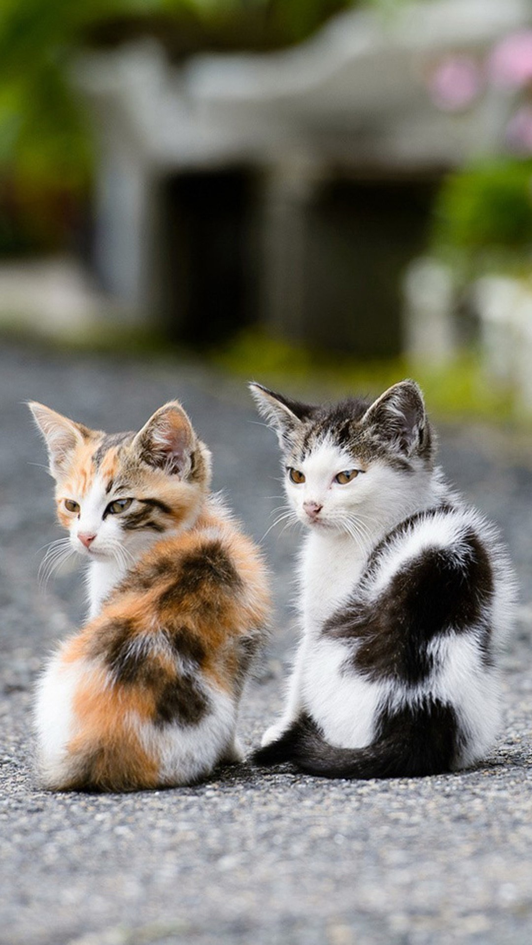 cute cat background 67 images