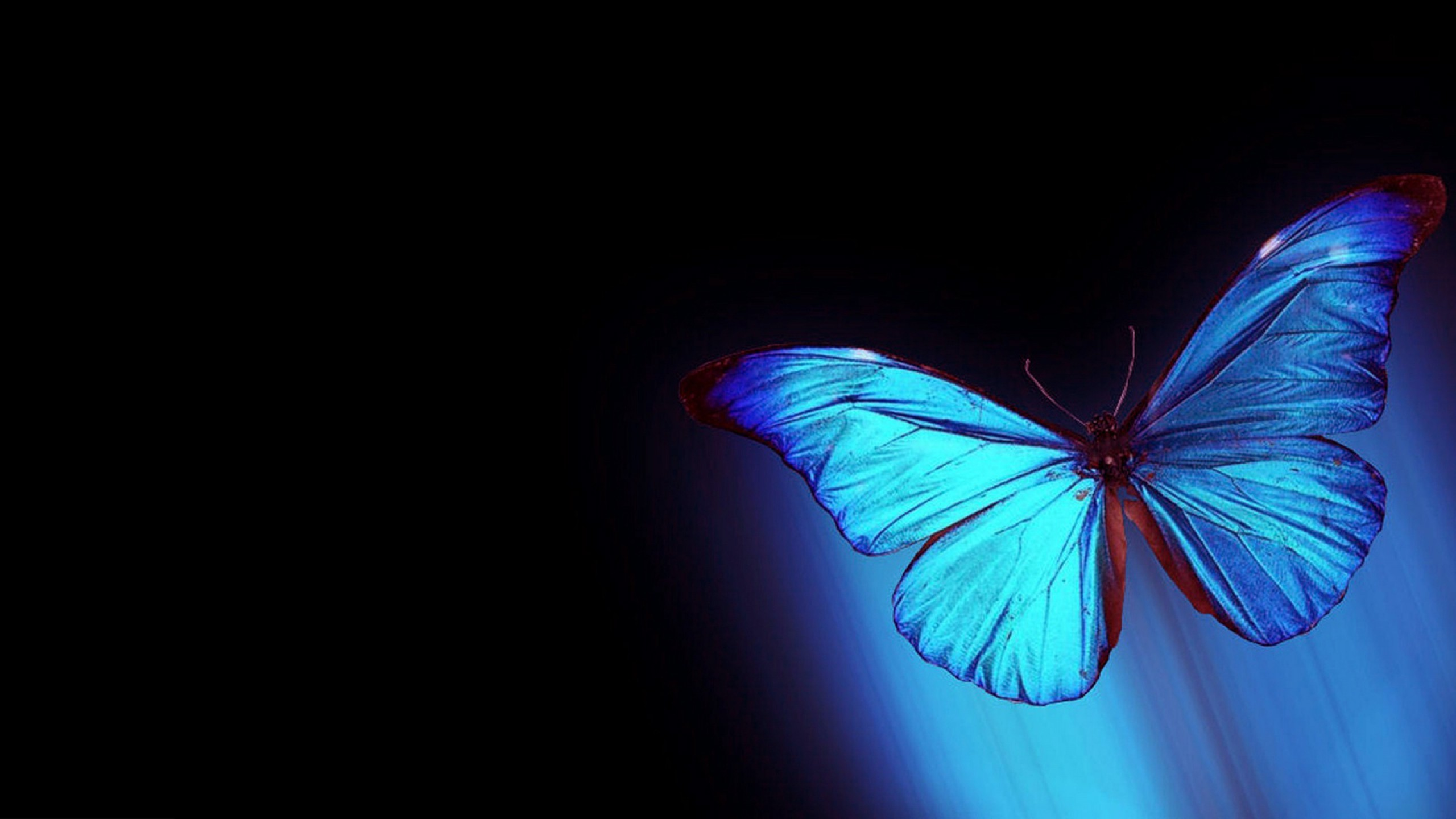 Golden butterfly Wallpapers Free by