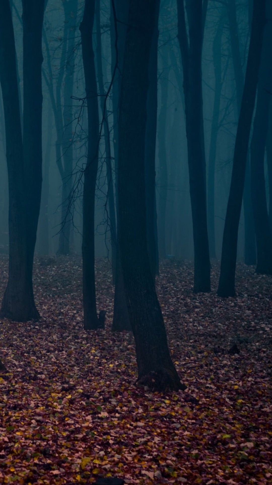 Dark Forest Iphone Wallpaper 74 Images