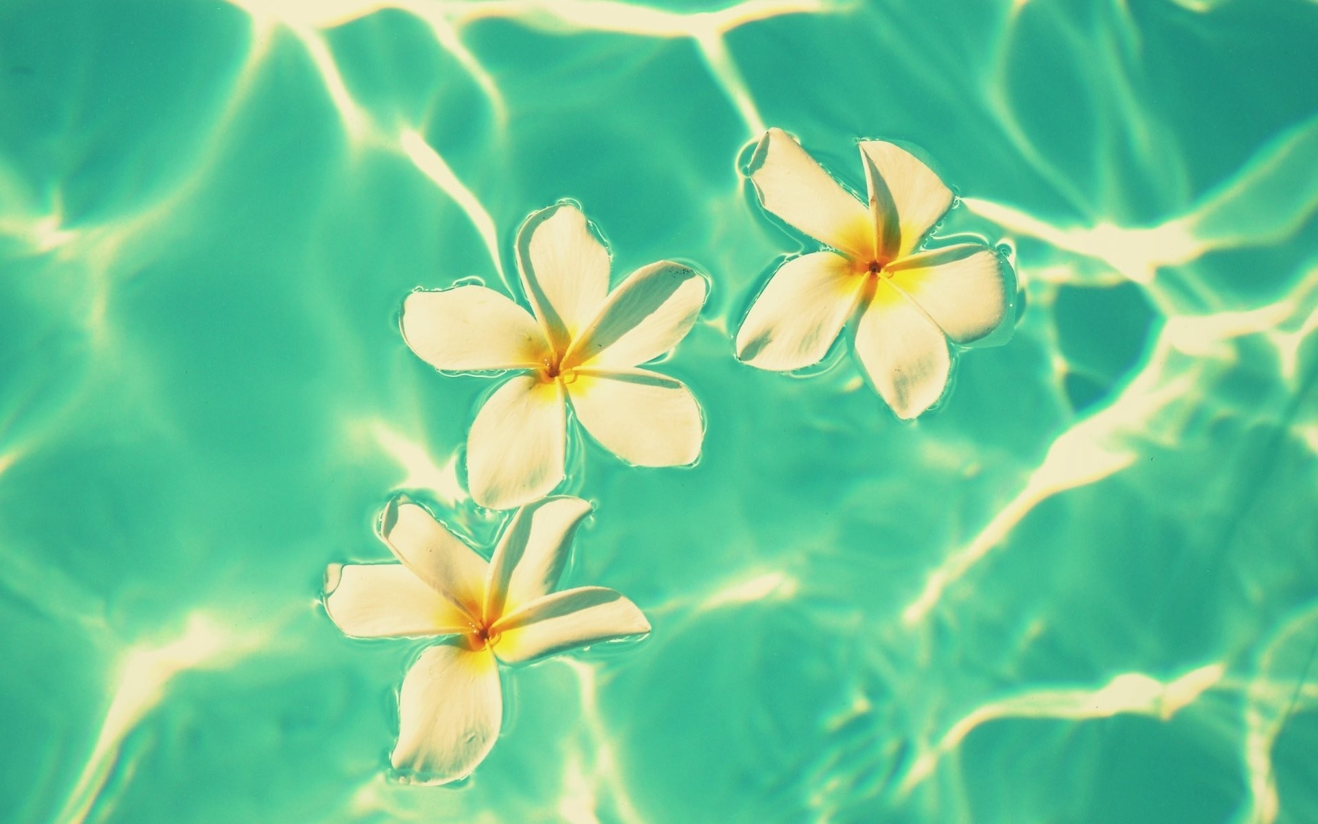 1920x1200 flower flowers flowers flower frangipani plumeria white water waves blue  flowers background wallpaper widescreen full screen