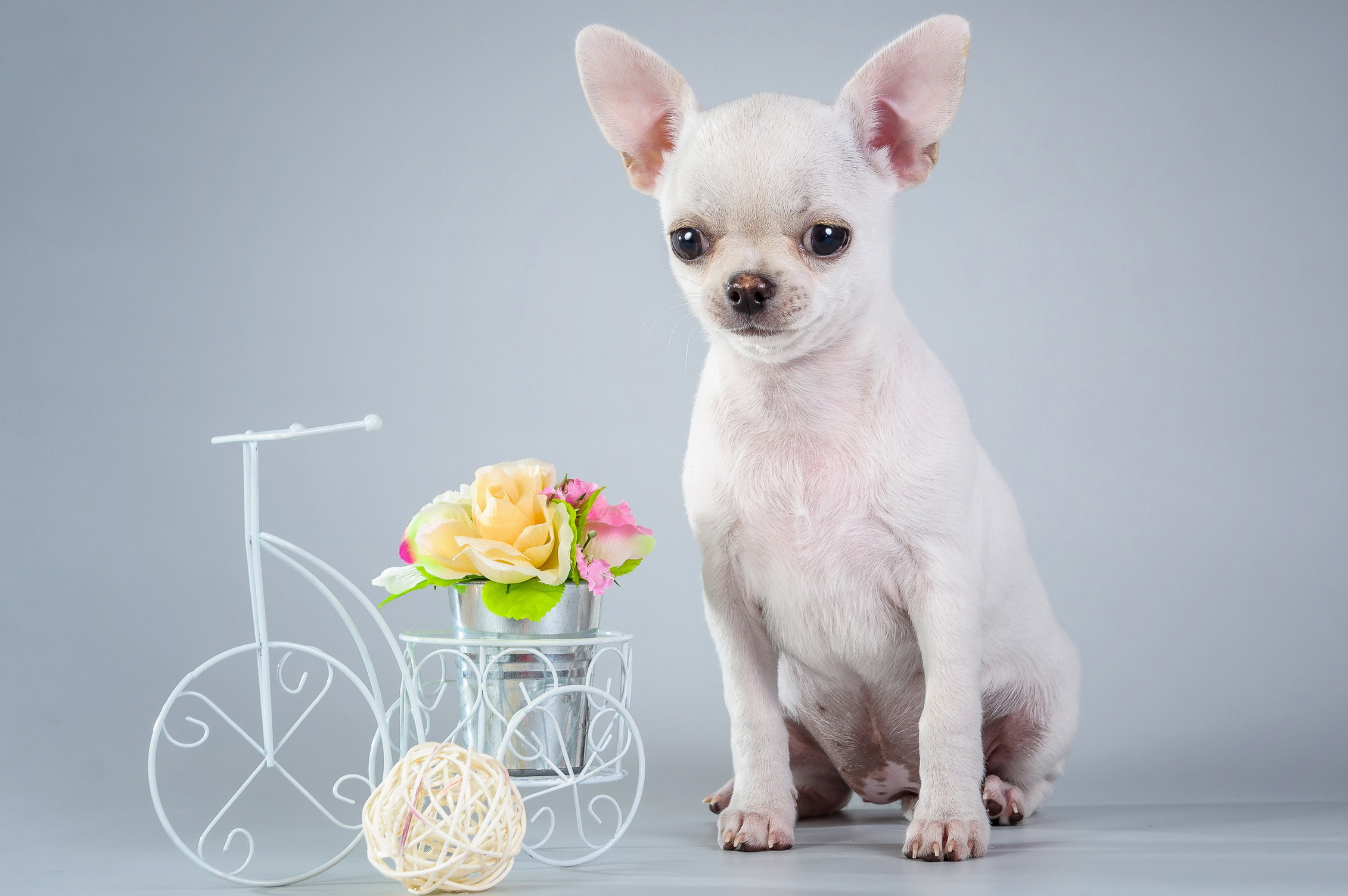 Cute Animals Wallpapers Free Download: Dog Backgrounds (57+ Images