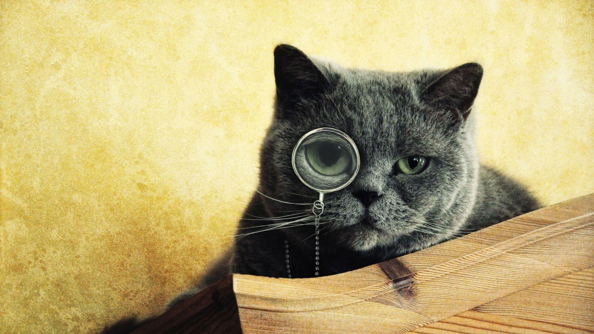 1920x1080 hd pics photos funny cat cute eye lens hd quality desktop background  wallpaper