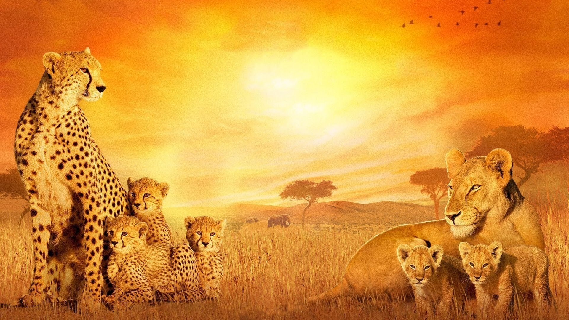 1920x1080 African Background 183 ① Download Free Stunning Wallpapers