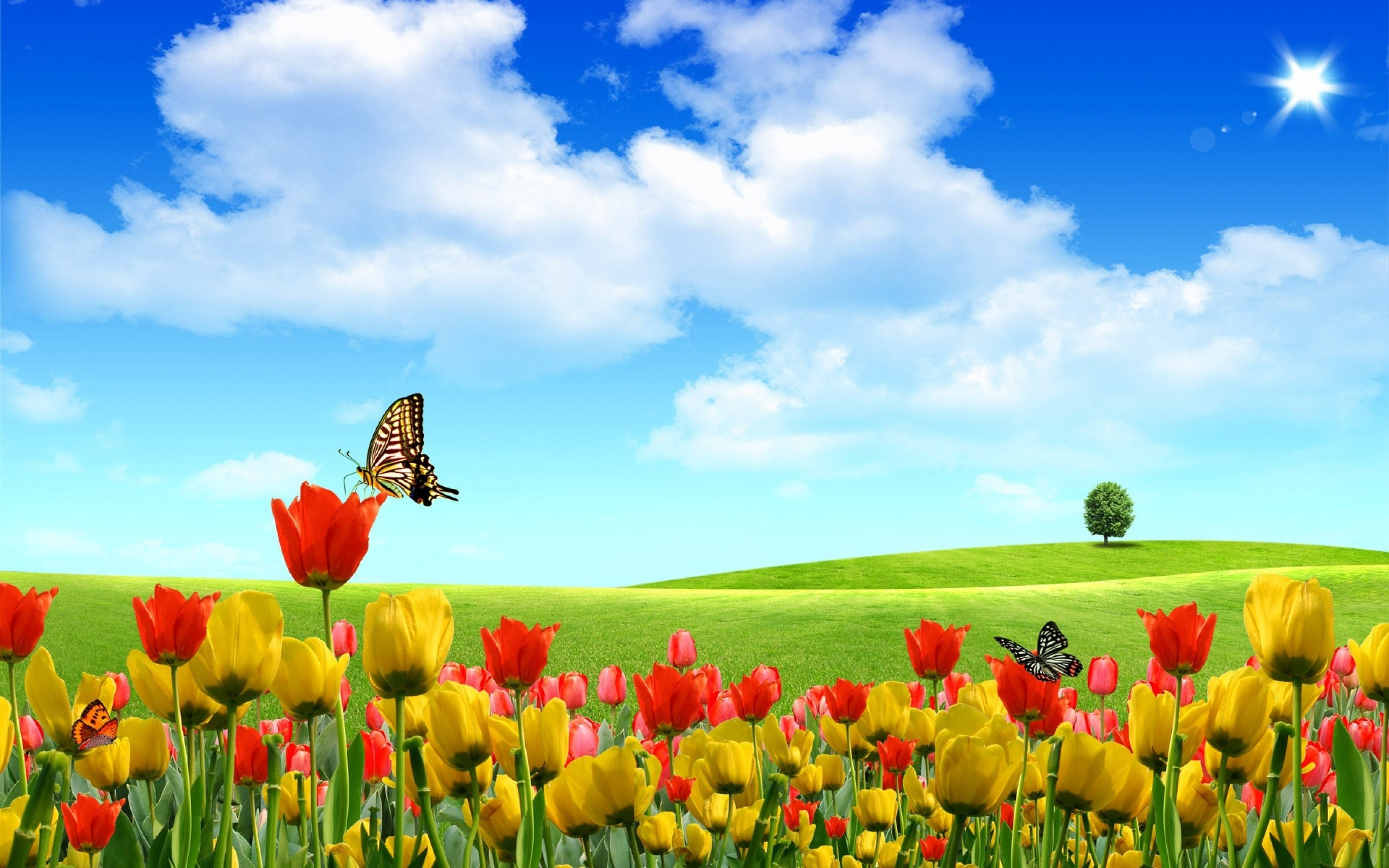 2880x1800 Field of Tulip flowers Background