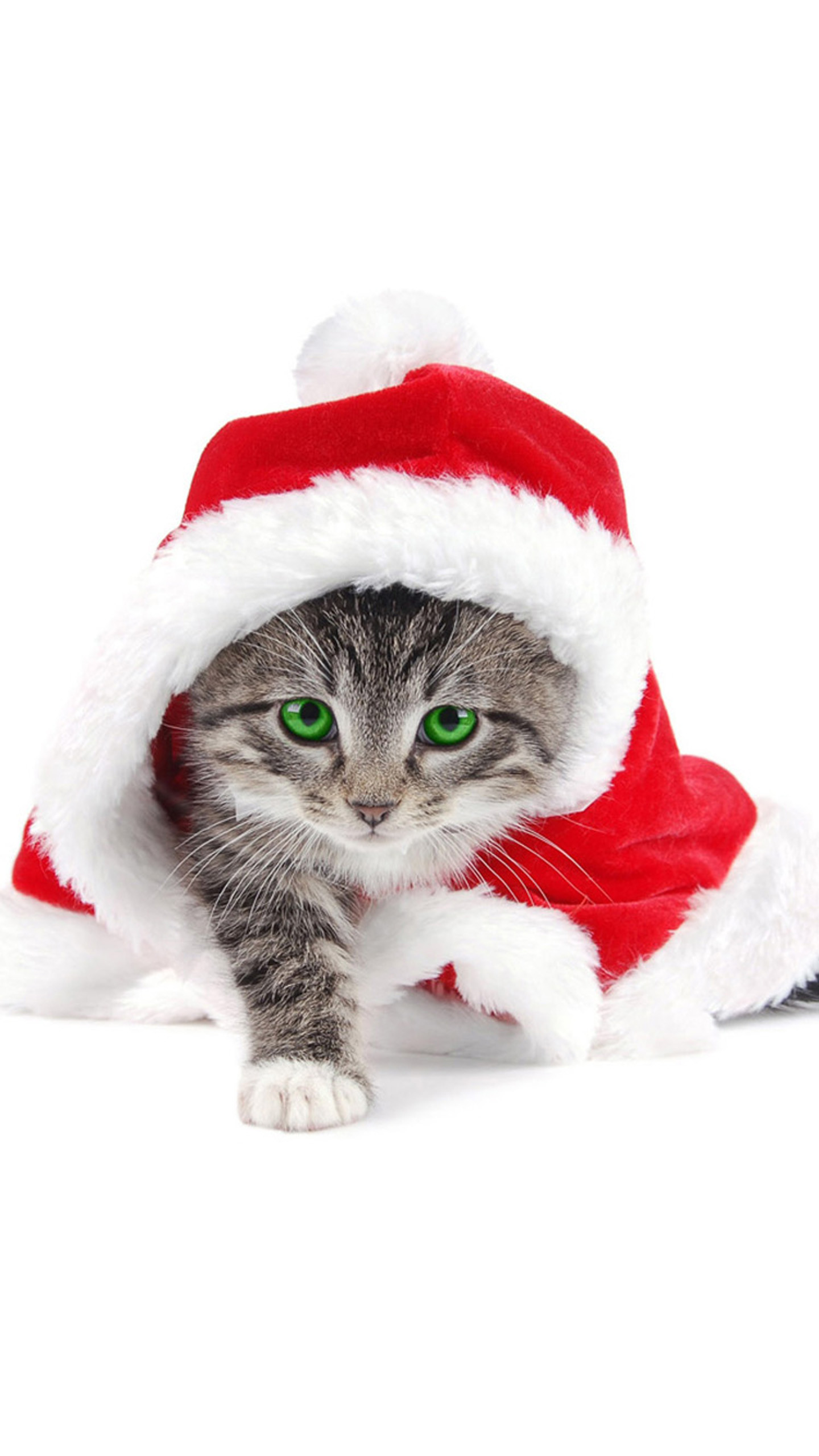 Best Christmas Tree For Cats