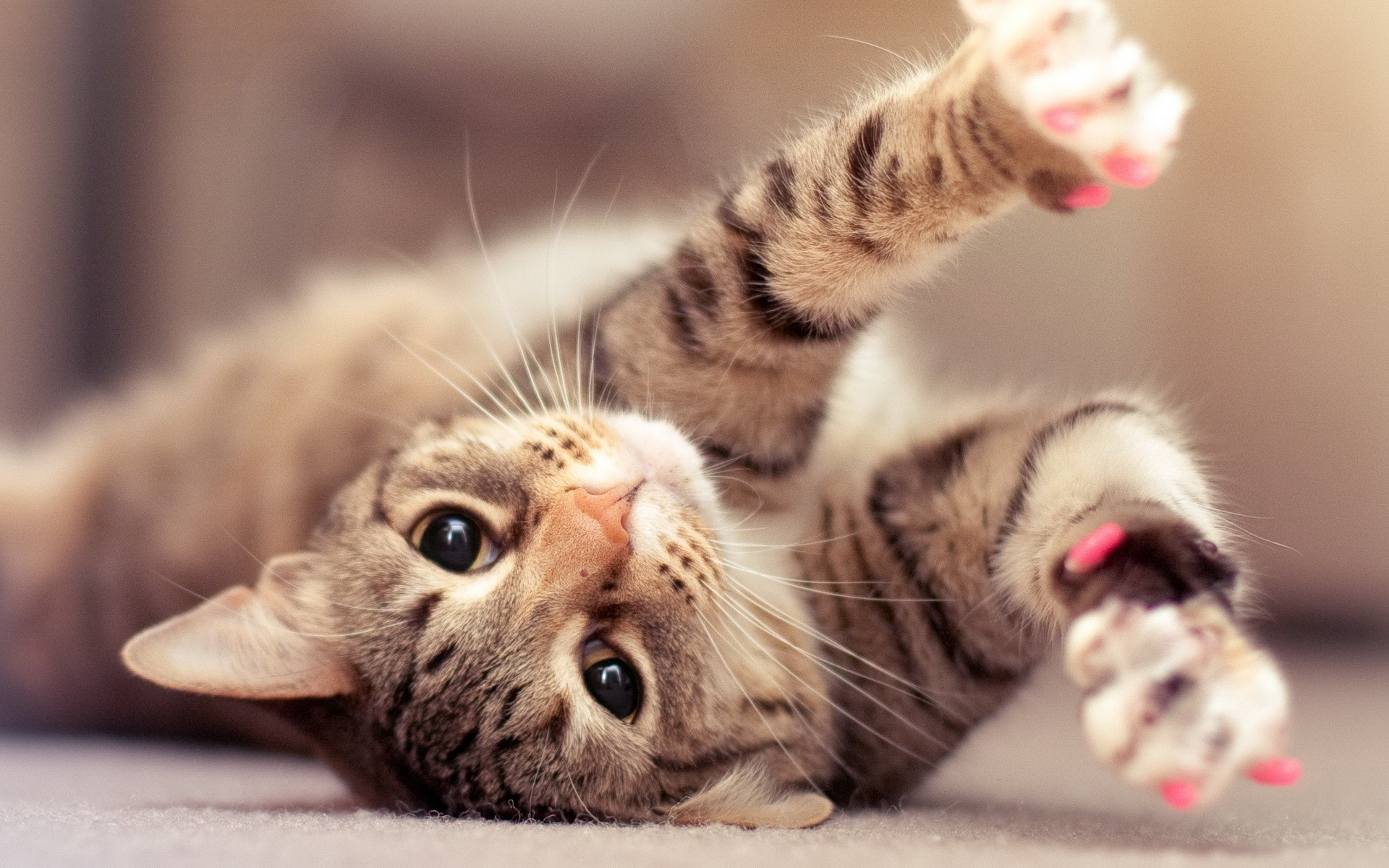 Cute Cat Wallpapers For Desktop 66 Images