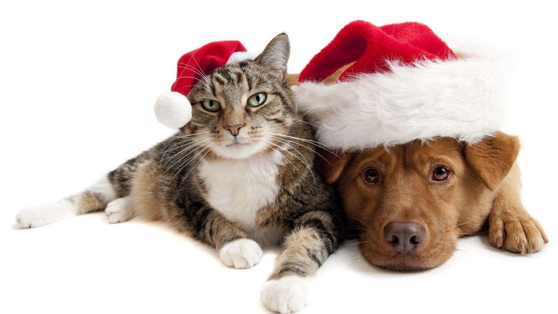 1920x1080 Cute Kittens and Dogs Christmas HD Wallpaper For Desktop .