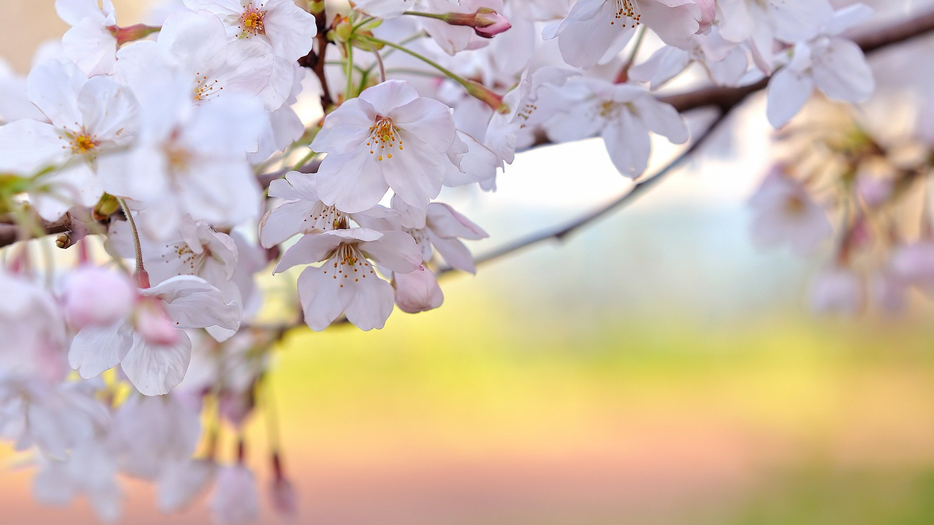 Pretty Spring Backgrounds And Wallpapers 60 Images
