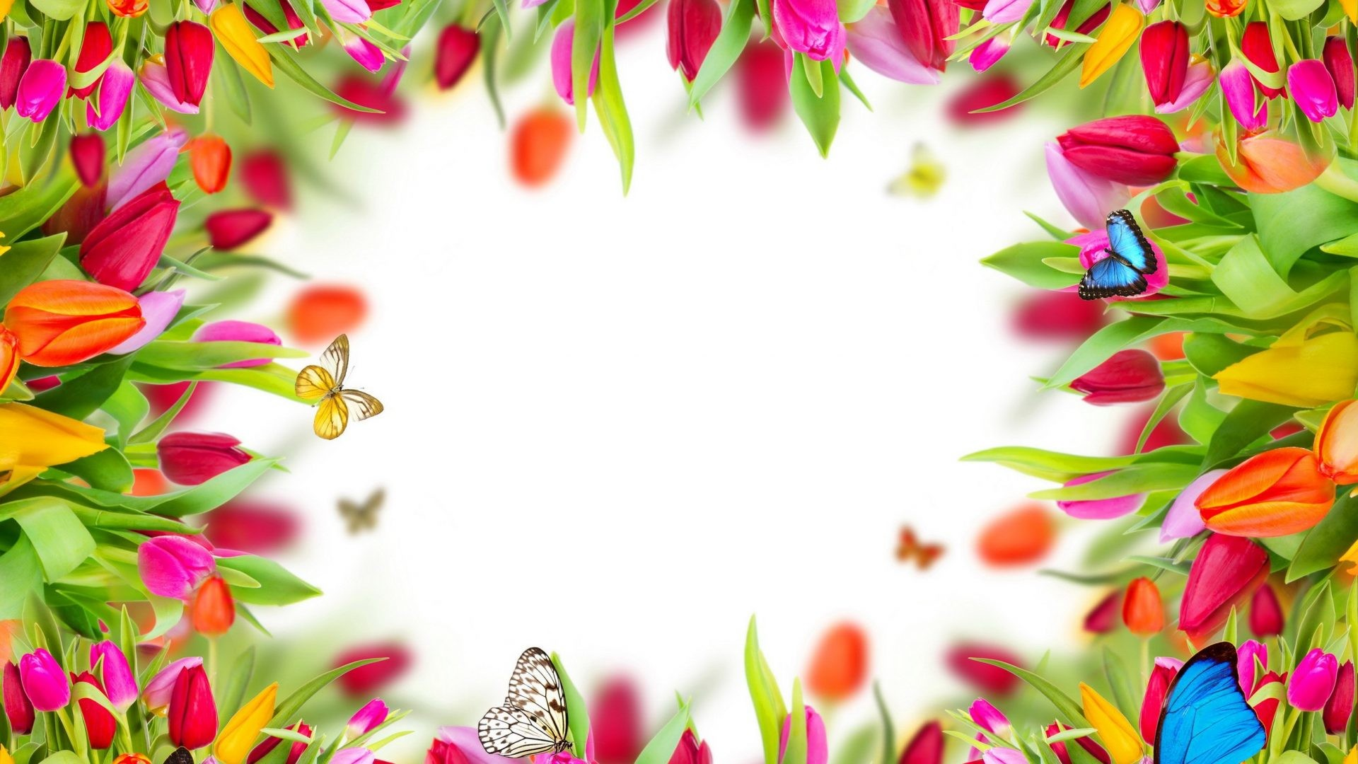 1920x1080 Spring Flowers Tulips Frame Butterflies Colorful Desktop Backgrounds -  2500x2300