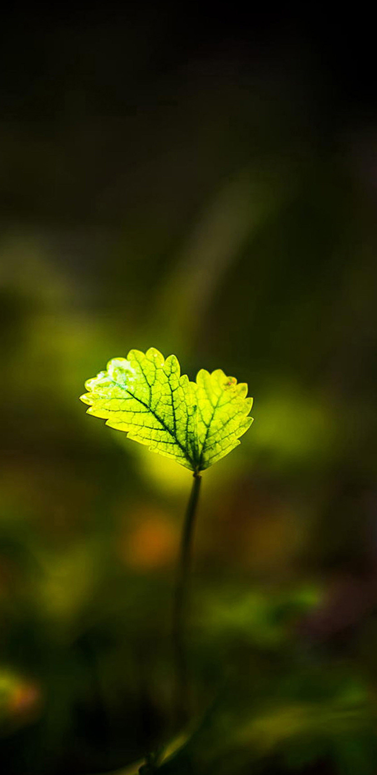 1440x2960 Shiny green leaves Galaxy S8 Wallpapers