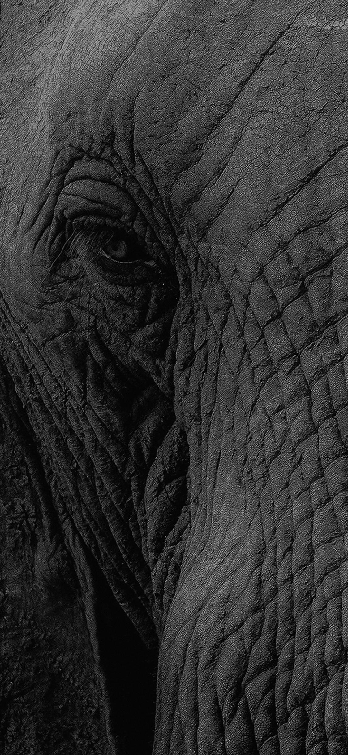 2880x1800 Wallpaperwiki Baby Elephant Wallpaper Free Download PIC