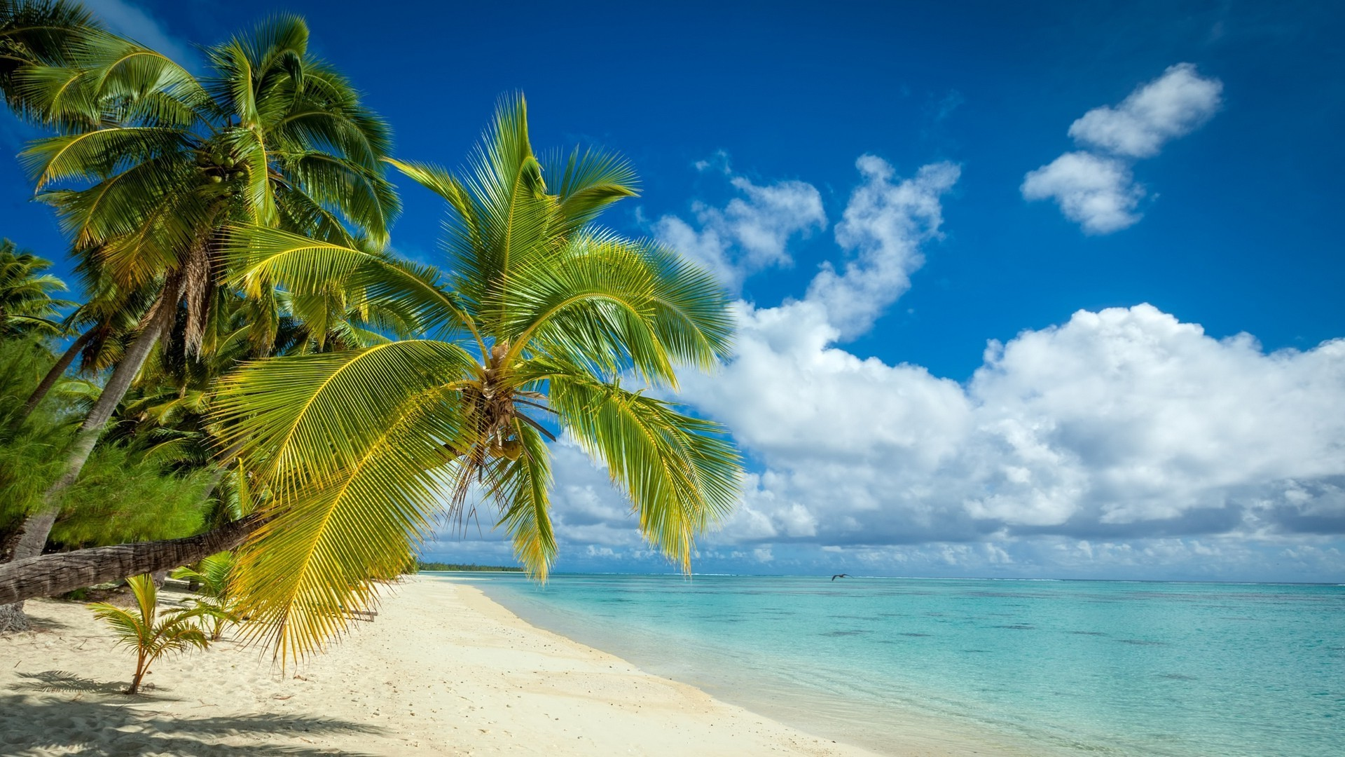 1920x1200 Hd Tropical Island Beach Paradise Wallpapers And Backgrounds