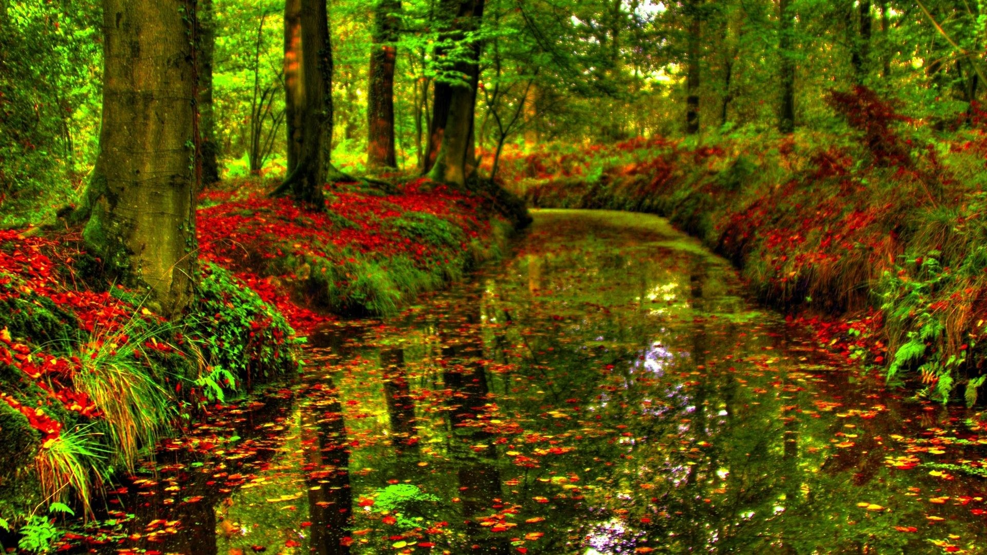 1920x1080 Canal Autumn Leaves Forest HD Wallpaper 1080p - 1920x1200