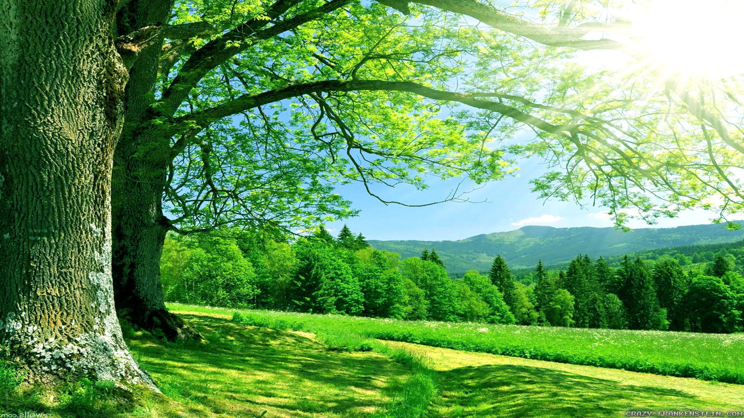 Nature Desktop Background (74+ Images