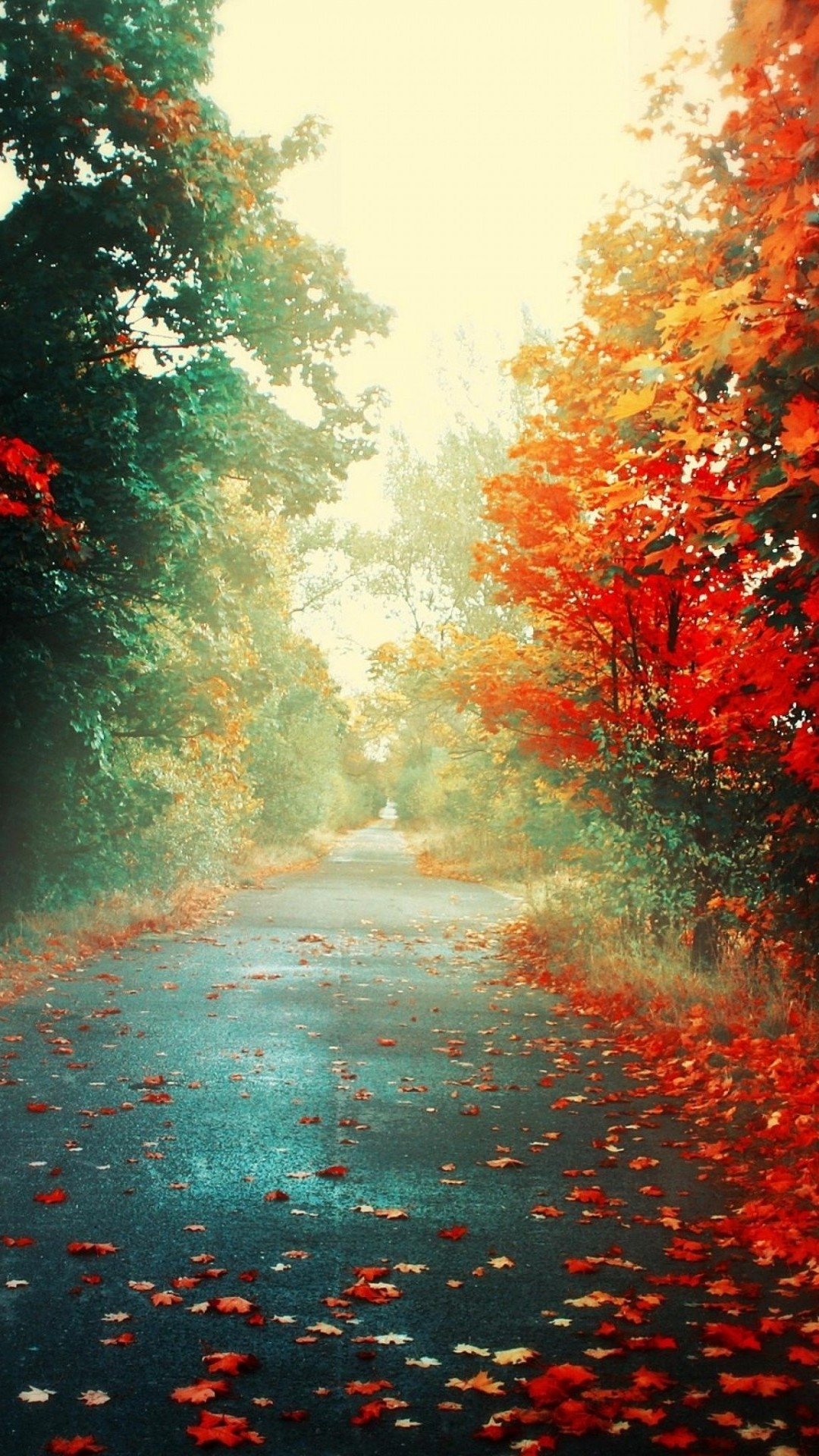 1080x1920 Autumn RoadSamsung Wallpaper Download | Free Samsung Wallpapers