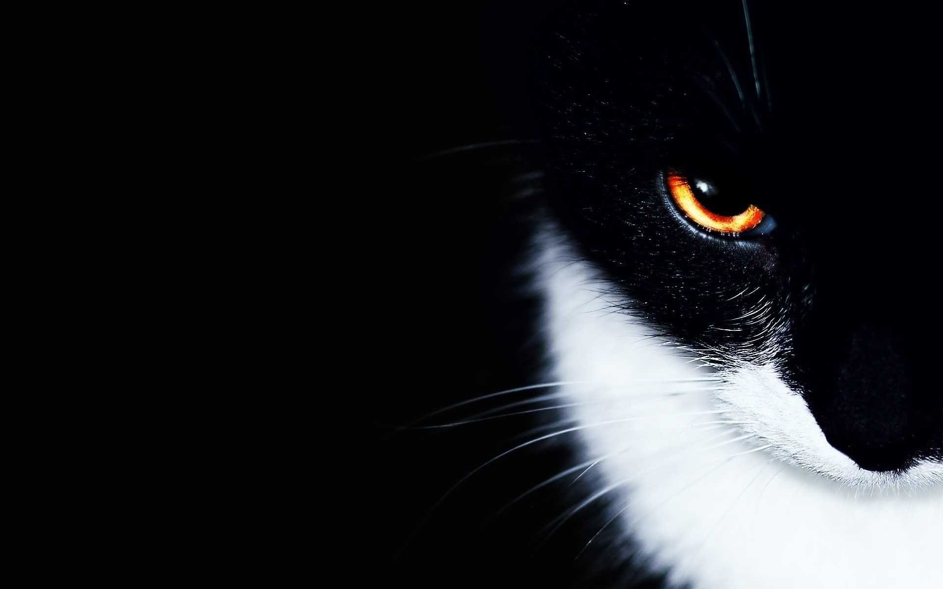 1920x1200 Black And White Cat Wallpaper