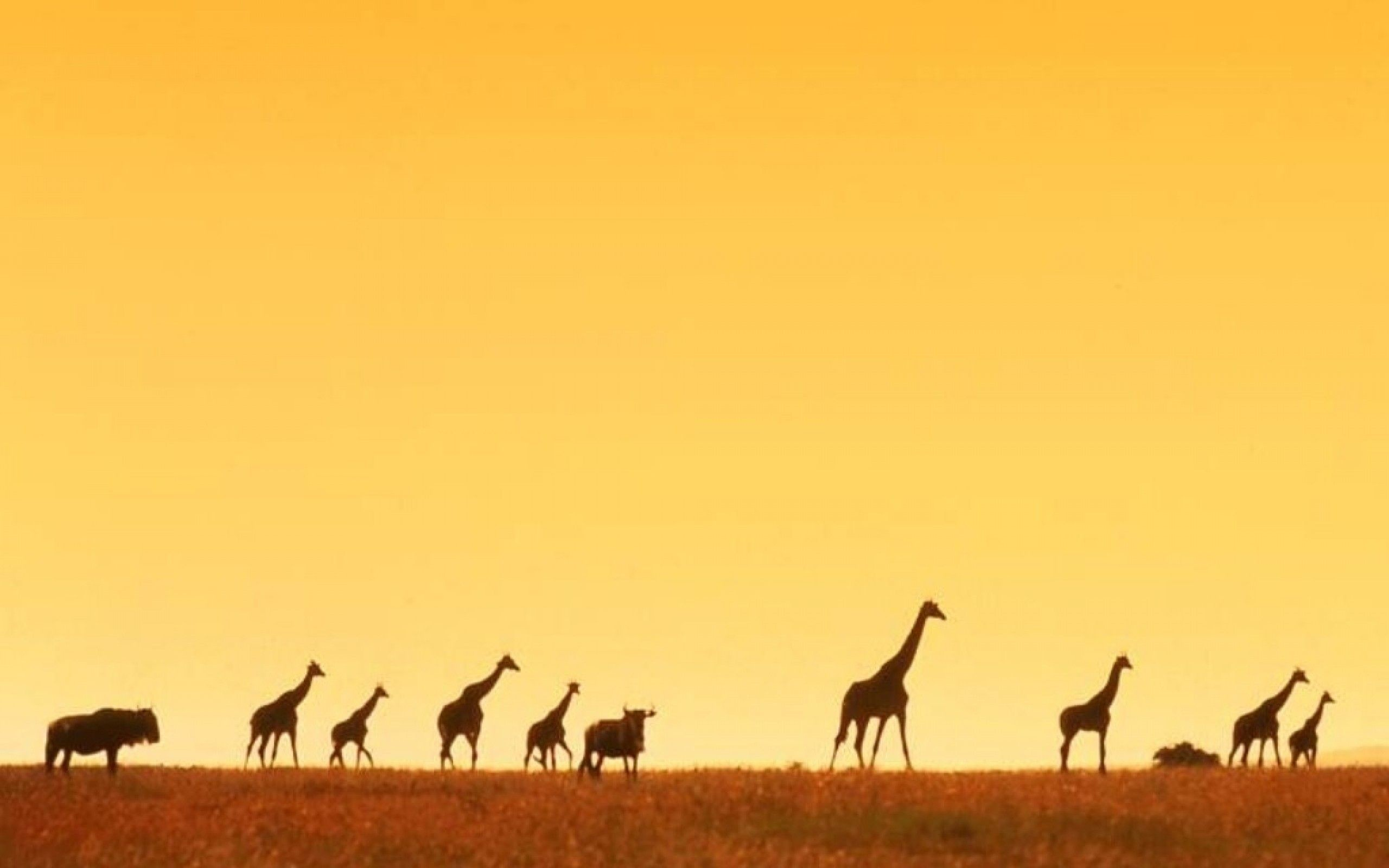 2560x1600 Giraffe Sunset Wallpaper Background with High Definition Wallpaper  Resolution  px 126.57 KB Animal Sunset Cute