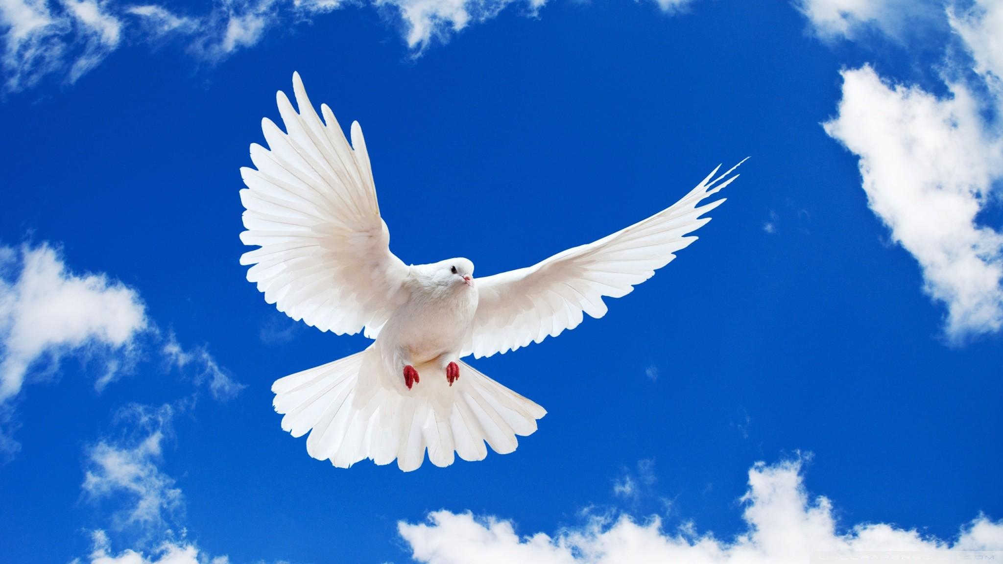 Holy Spirit Backgrounds 44 Images