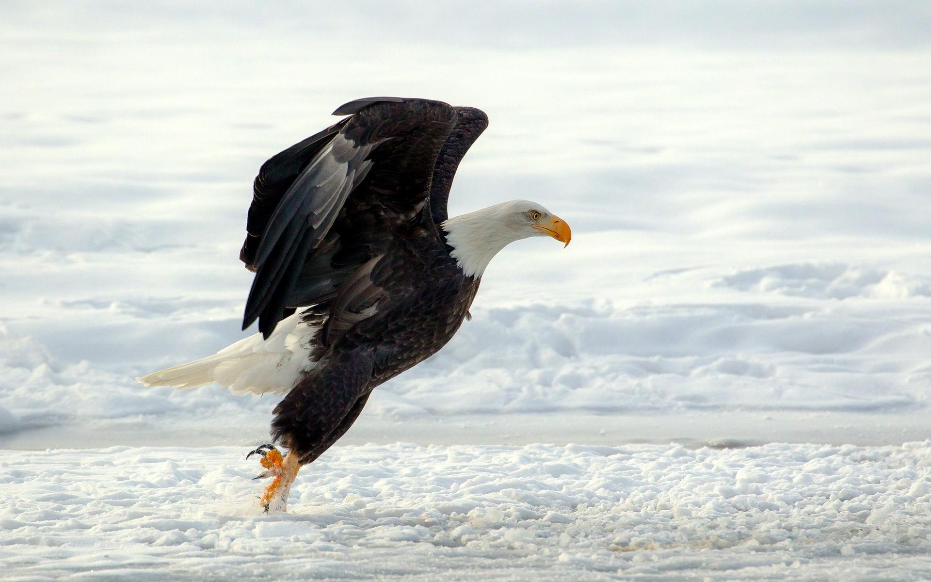 Eagles Desktop Wallpaper (66+ images)
