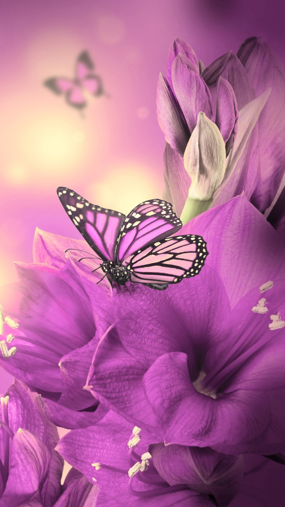 1080x1920 ... Free Butterfly Wallpapers For Android Group