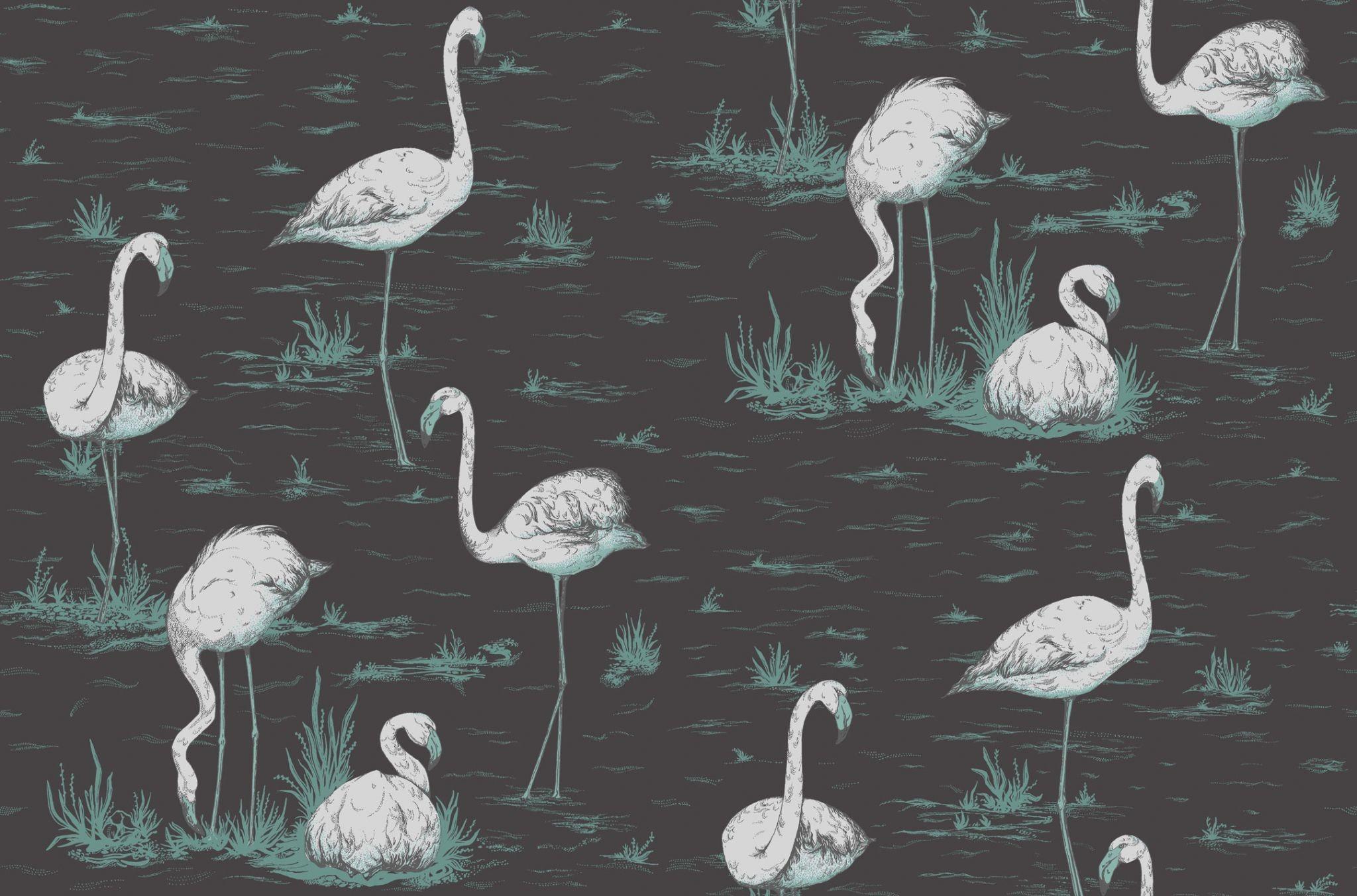 Flamingo Wallpaper 54 Images