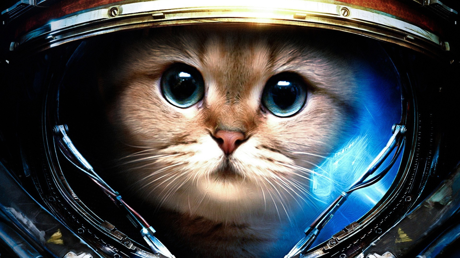 Space Cat Wallpaper 63 Images