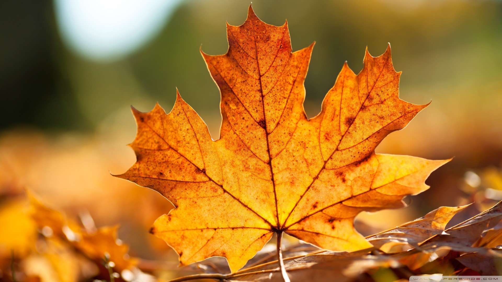 Genial 1920x1080 Hello Autumn September Fall Images Wallpapers Hd 1920Ãu20141080