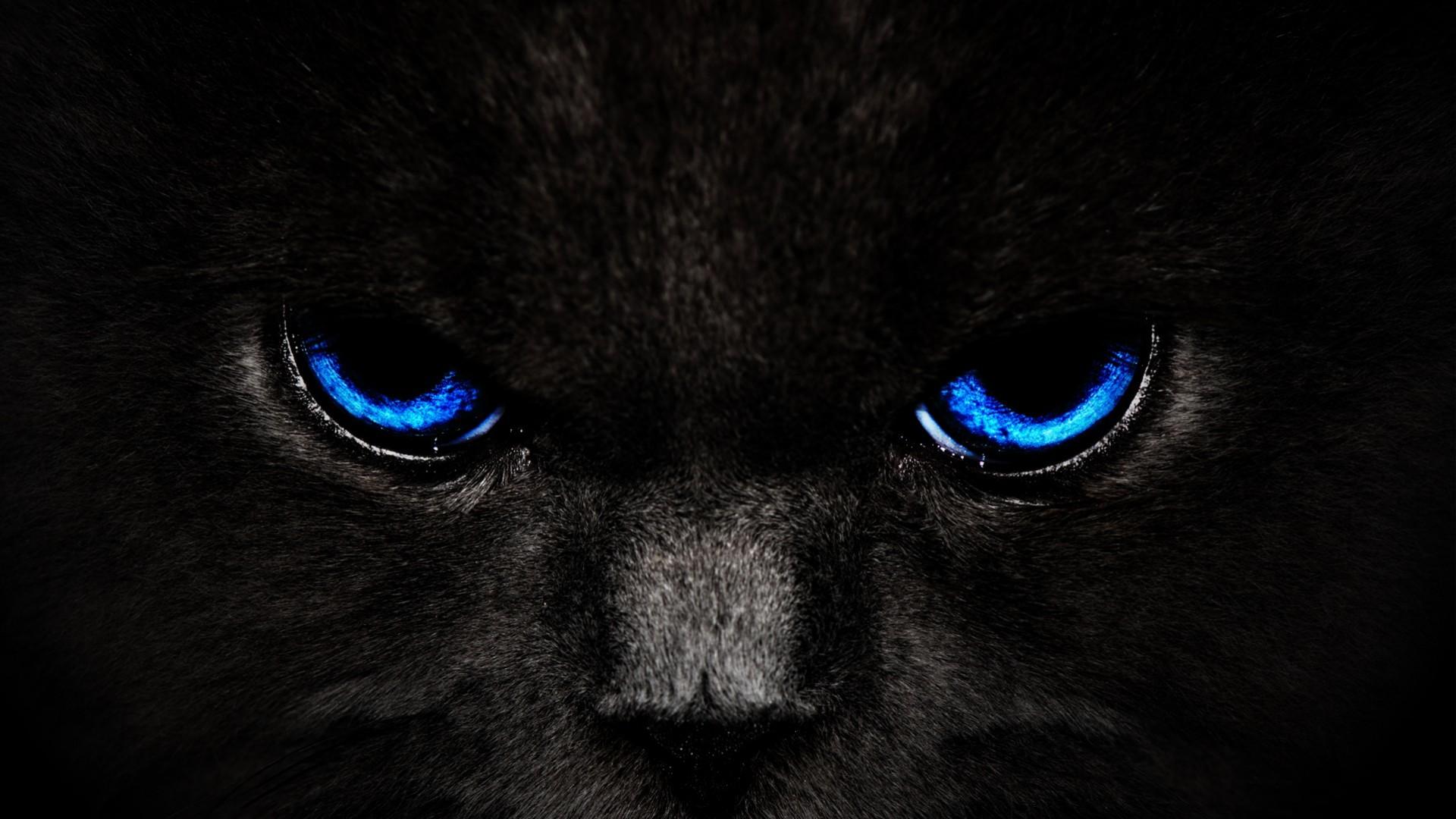 1920x1080 Black Panther Blue Eyes Wallpaper
