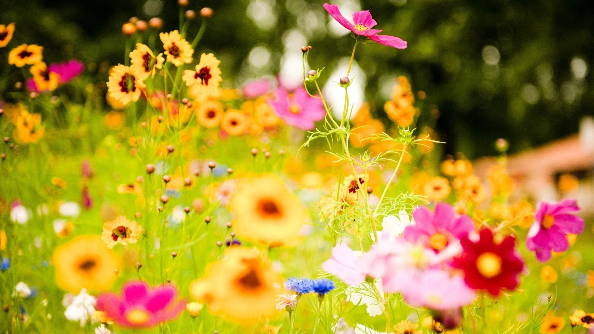 1920x1080 Pics Photos - Colorful Flowers Wallpapers In 1366 768 Resolution 333086
