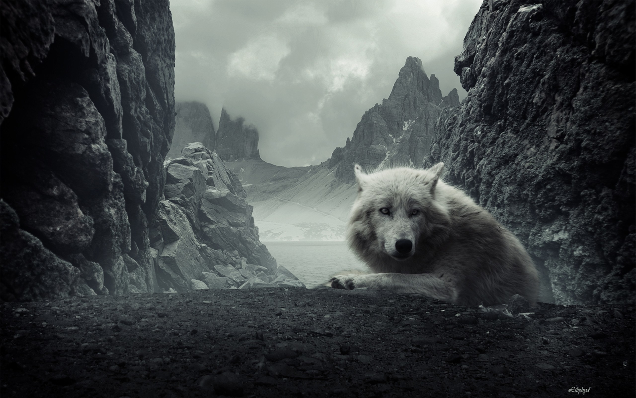 2560x1600  <b>Howling Wolf Wallpaper</b> - WallpaperSafari