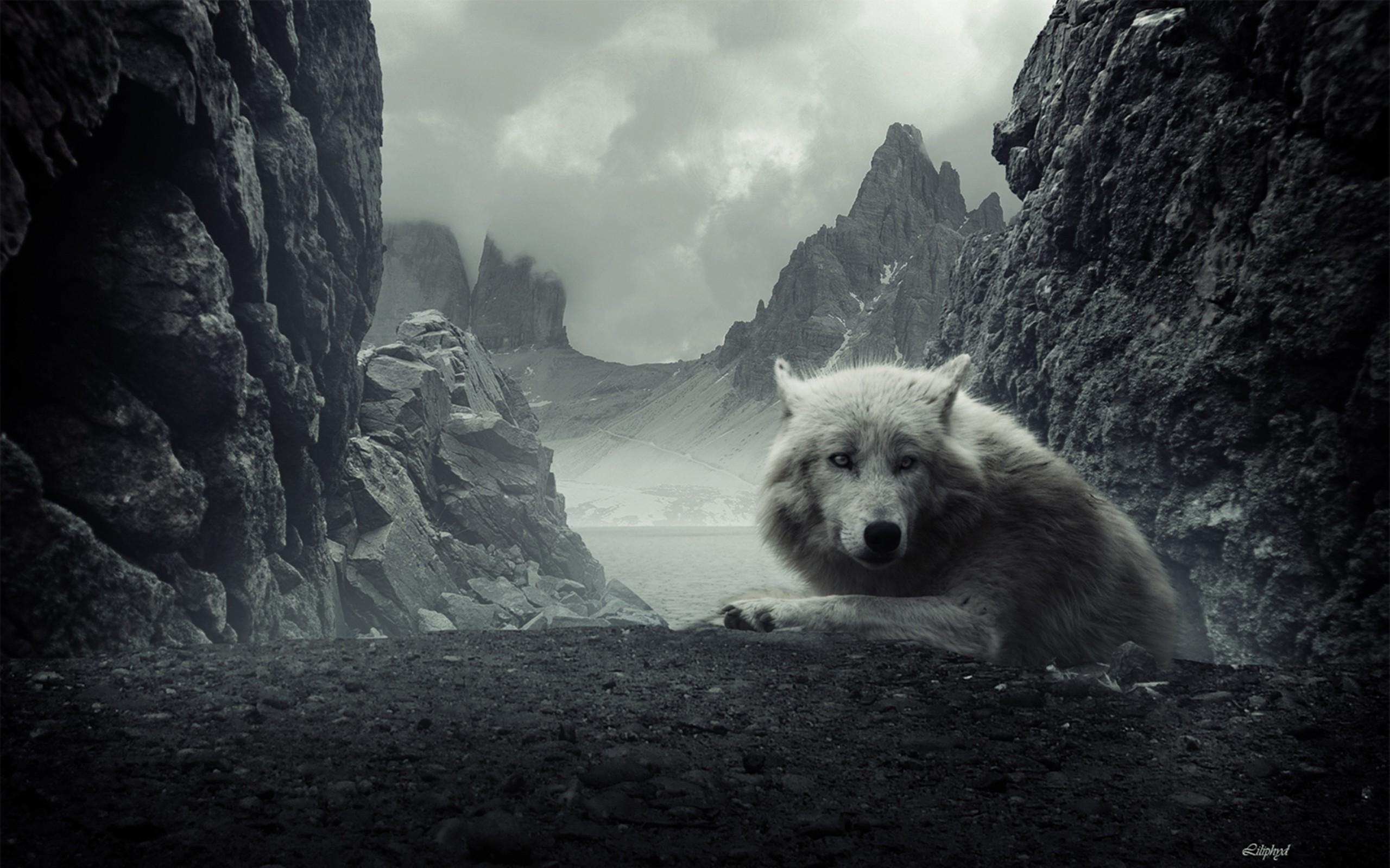 Wolves howling wallpaper