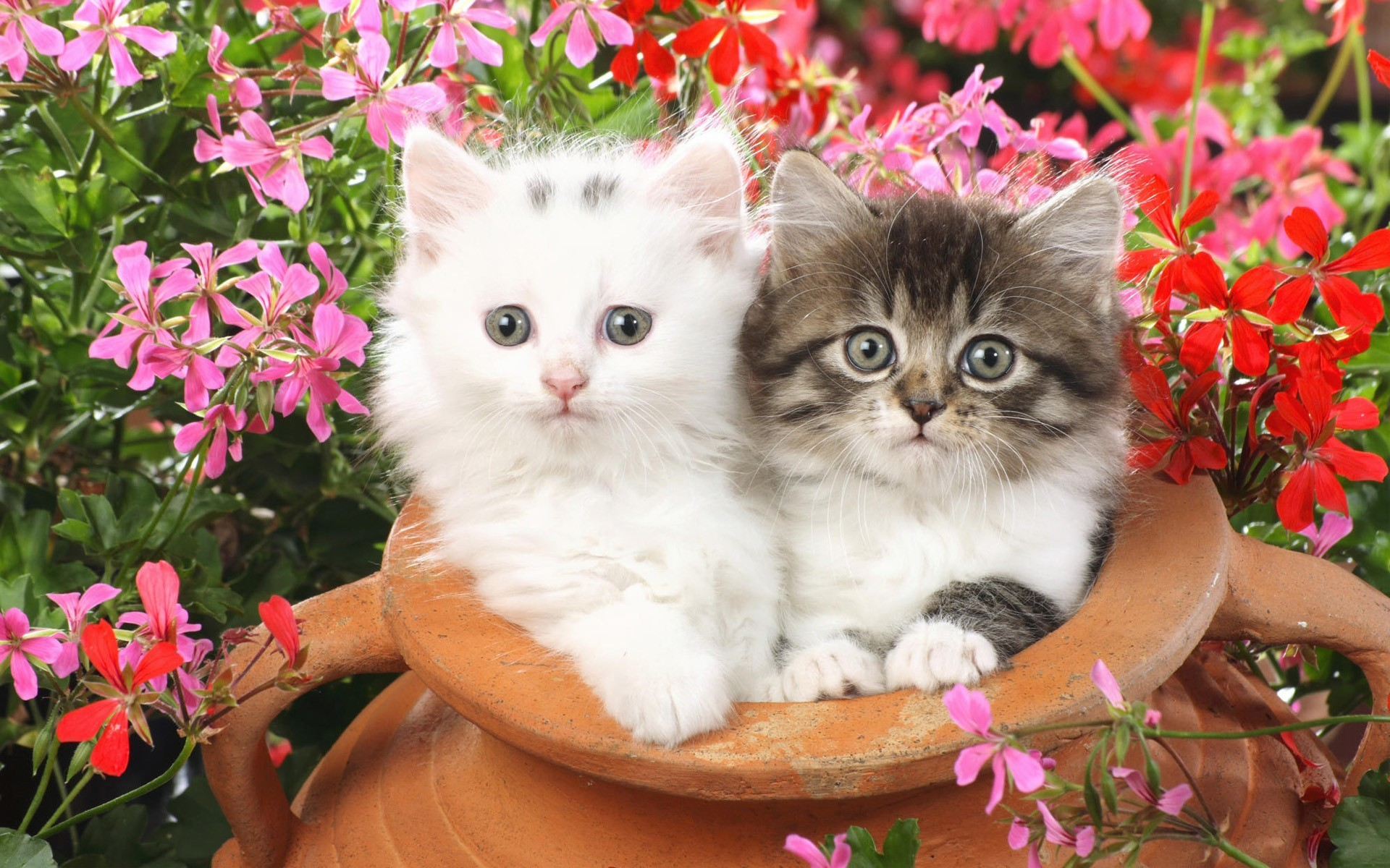 1920x1200 Cute Cats and Kittens
