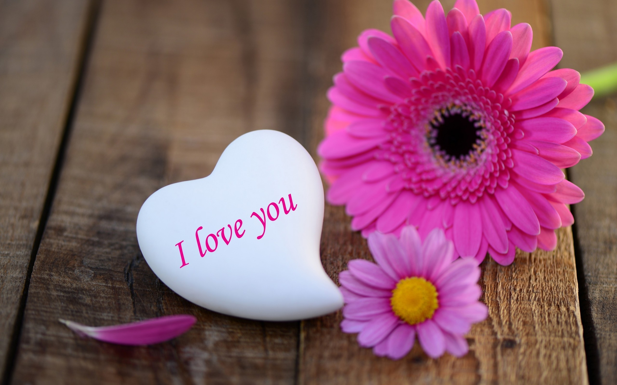 2560x1600 pink-daisies-heart-stone-i-love-you-wide- ...