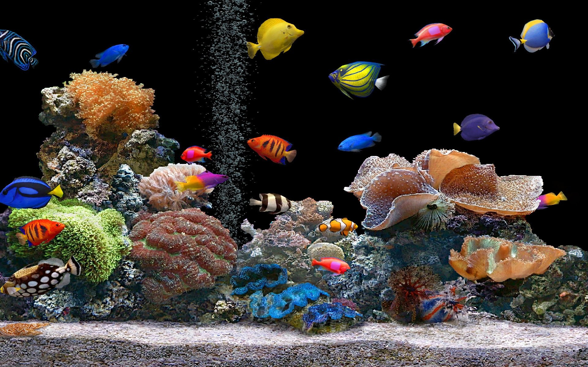 1920x1200 Aquarium Colorful Screensavers wallpapers HD free - 138274