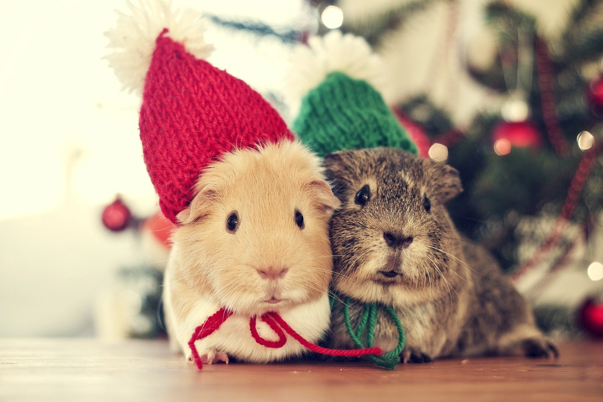 christmas animal wallpaper (67+ images)