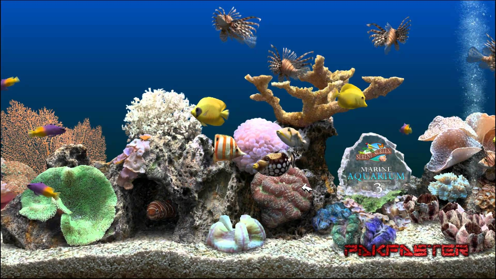 1920x1080 Animated Aquarium Desktop Wallpaper Windows : Usmc wallpapers and  screensavers wallpapersafari