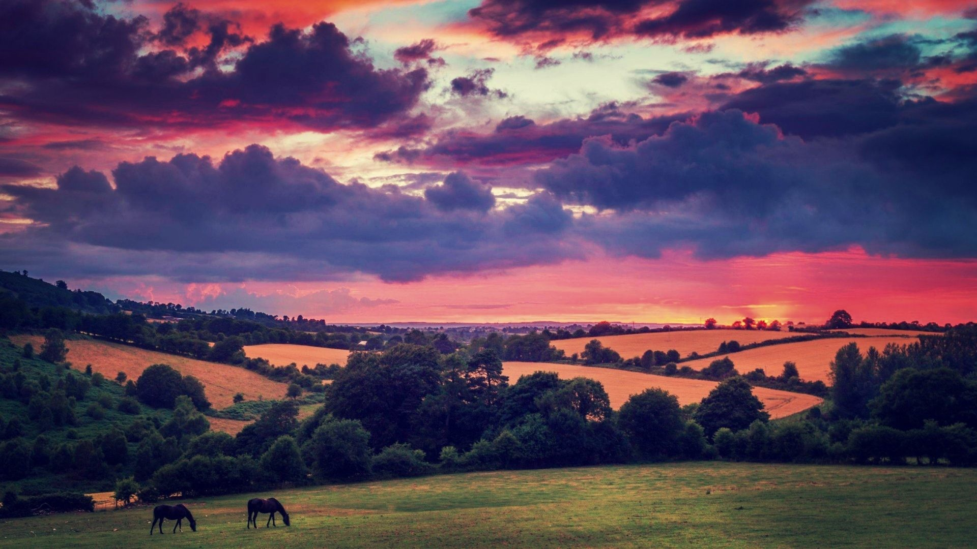 1920x1080 Plains Tag - Hills Irish Animals Fields Clouds Plains Trees Flora Sunset  Ireland Nature Evening Horses