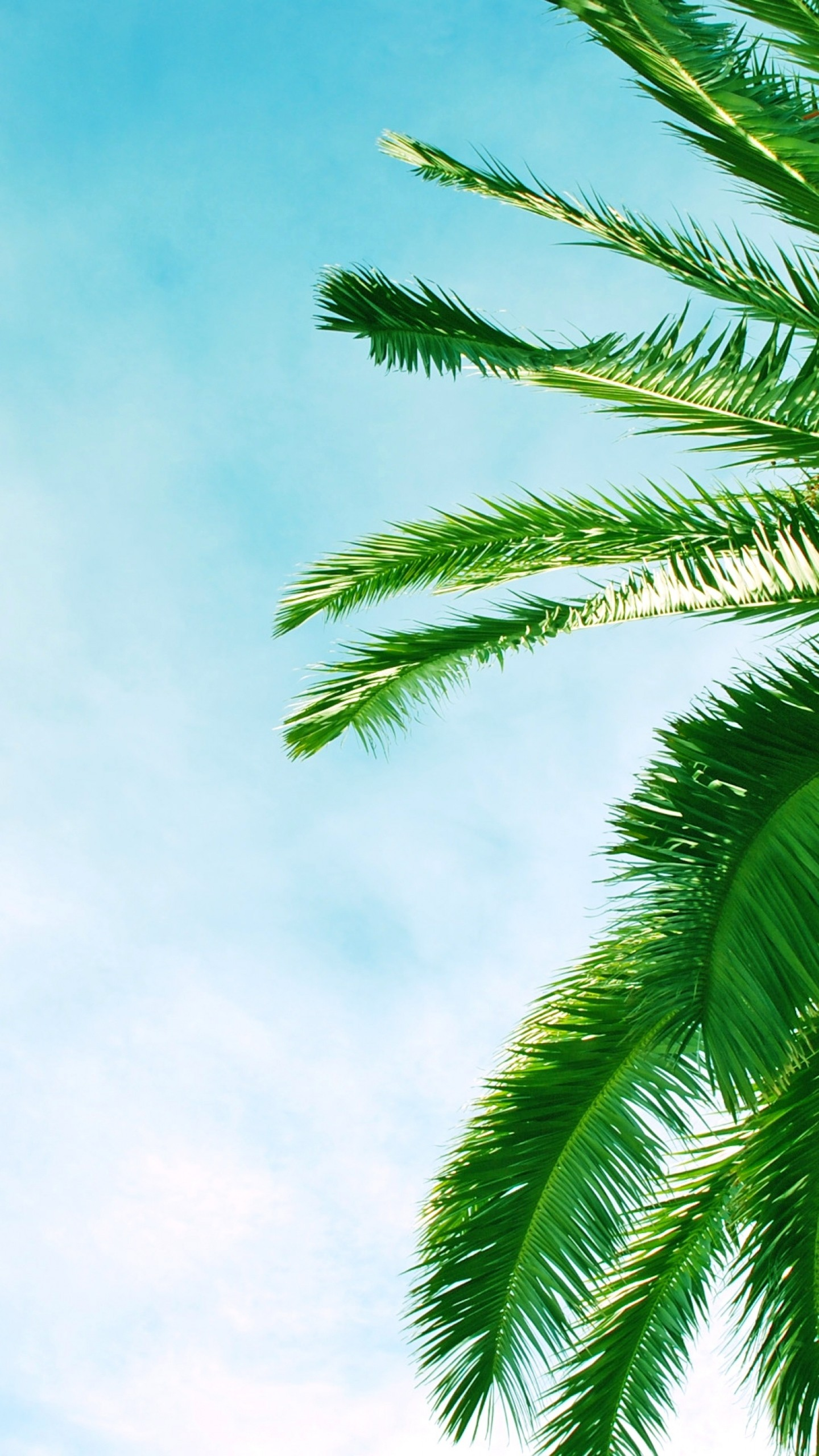 Palm Tree Iphone Wallpaper 67 Images