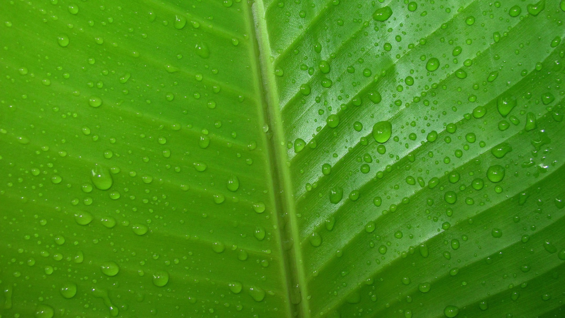 Green Leaves Wallpaper (66+ Images