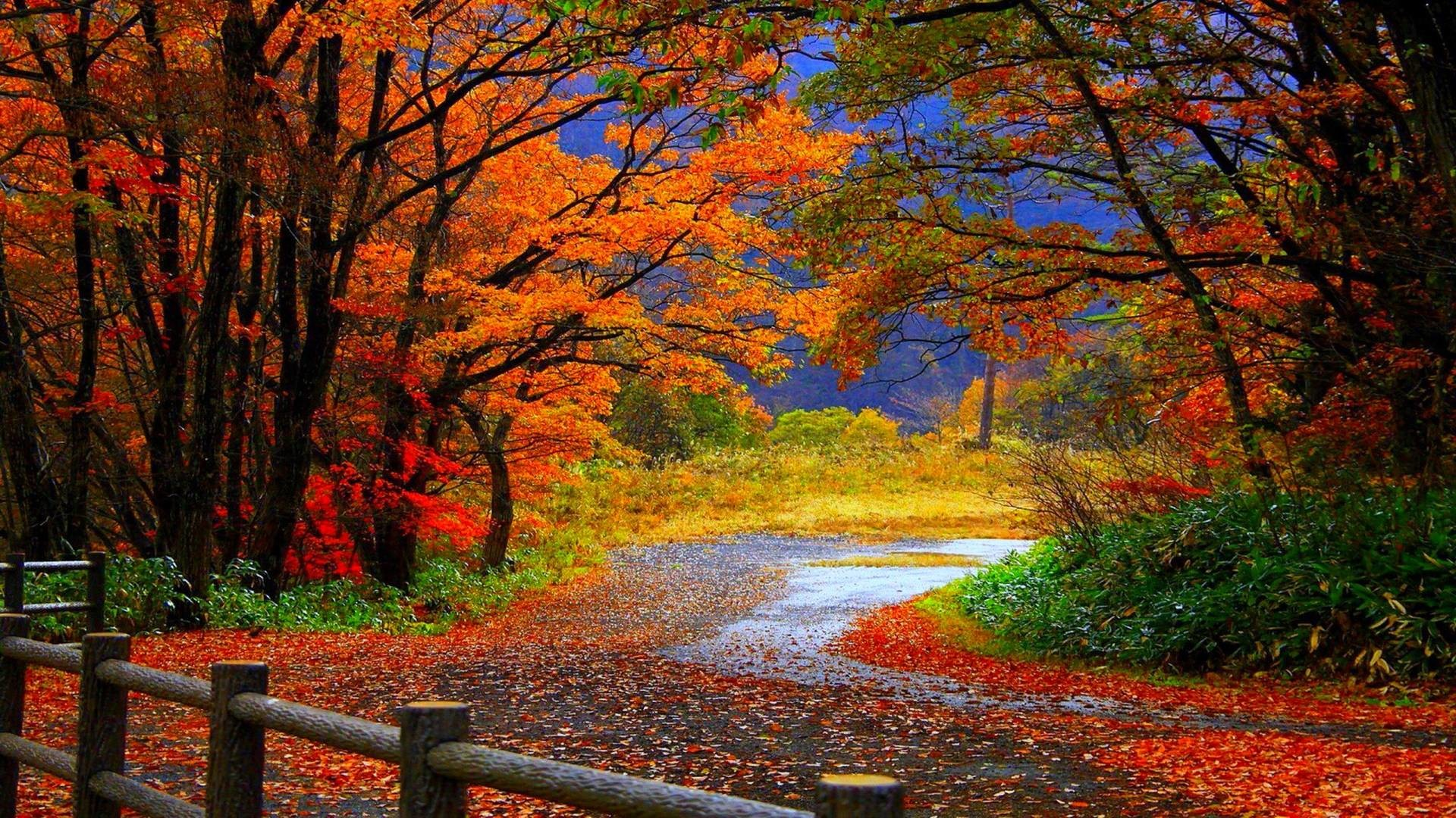 1920x1080 showing posts media for fall leaves scenes wallpaper www