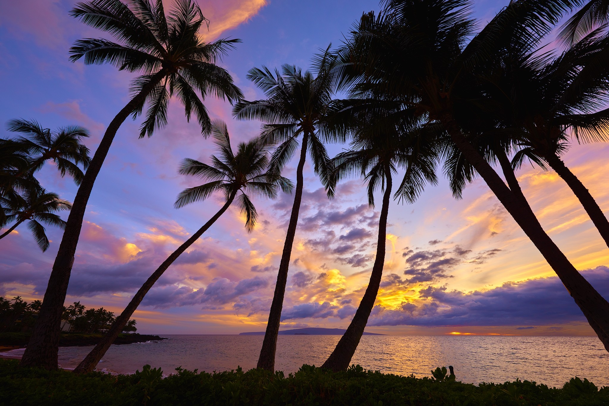 Palm Tree Wallpaper (68+ Images