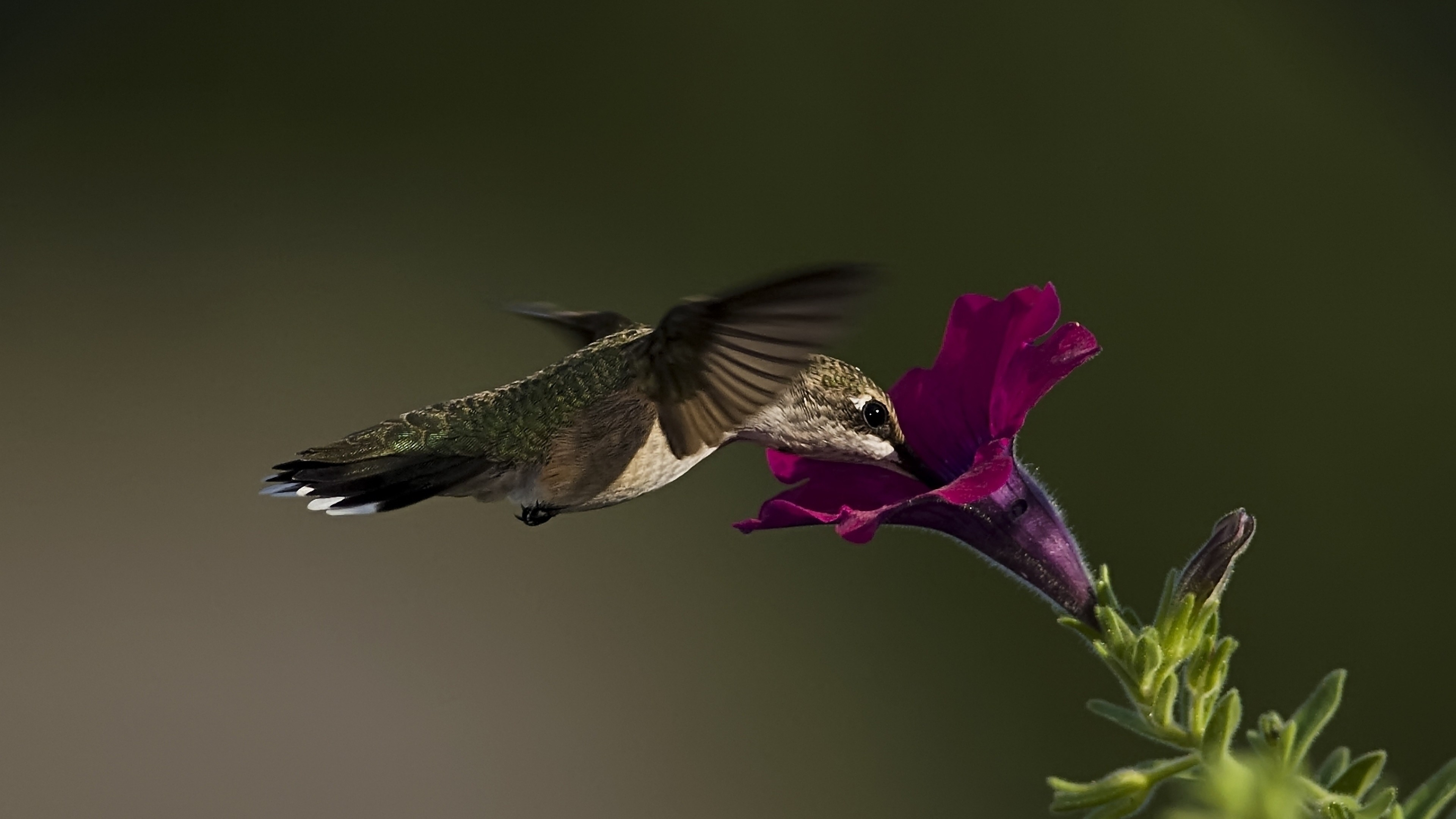 Wallpaper Birds And Flowers 61 Images