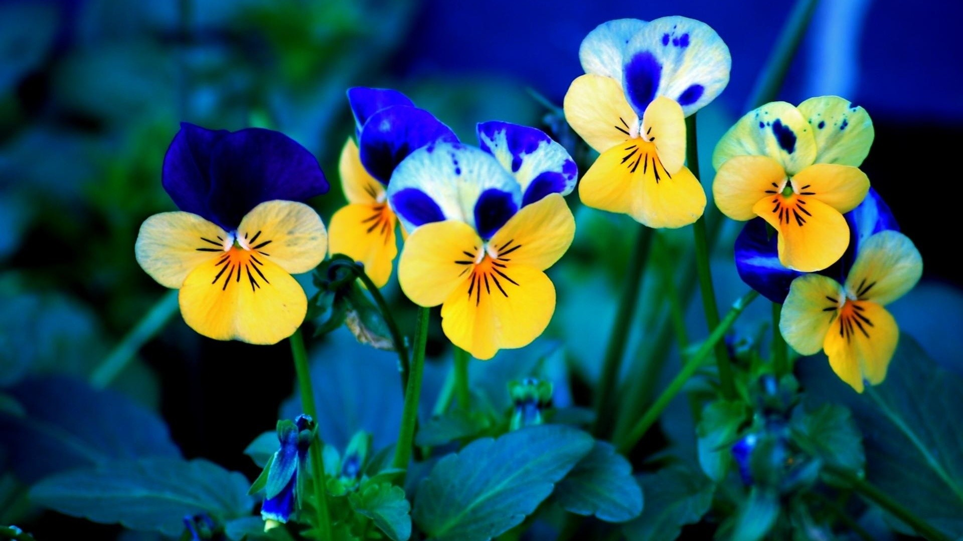 1920x1080 Spring Flowers Wallpapers Desktop Background Is 4K Wallpaper