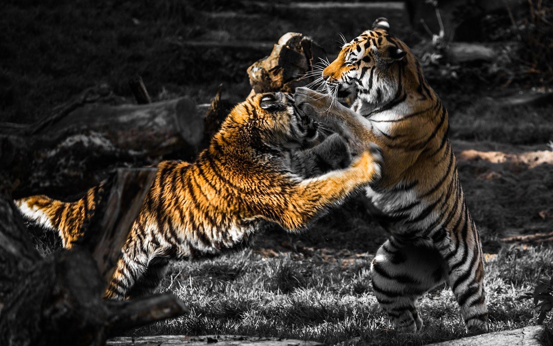 Memphis Tigers Wallpaper (71+ images)